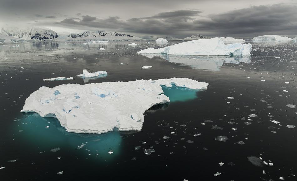 Die algenreiche Unterseite der Eisschollen im Polarmeer ist der Lebensraum des Krills, er stellt den Grundbaustein des Nahrungsnetzes in der Antarktis dar. Bild: Katja Riedel